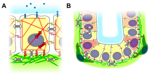 3-d cues in microenvironment