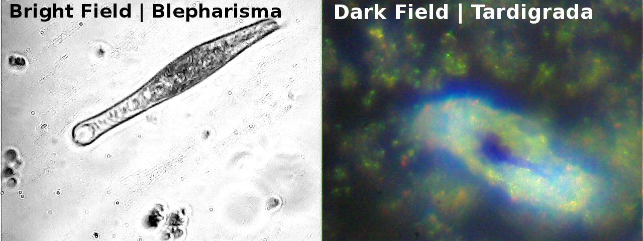 diy_microscopy_contrastmodes_side
